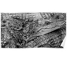 crocs - saigon, vietnam Poster