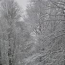 beautiful winter trees by nancy dixon