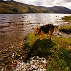 Alfie Loch by Nik Watt