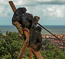 Monkeying around : Which Way is Africa ??? by AnnDixon