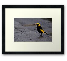 Bright Bird on a Dull Day Framed Print