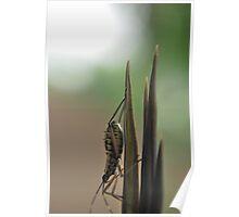 A bug's life... Poster