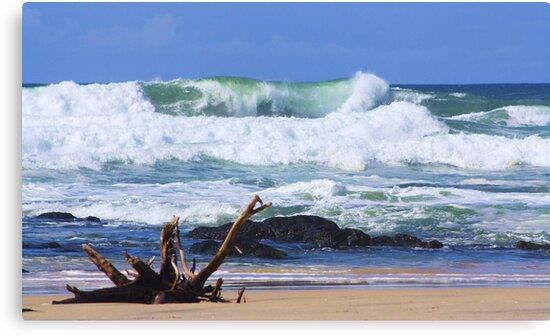 wild surf ... by gail woodbury