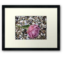 Seashell Rose Framed Print
