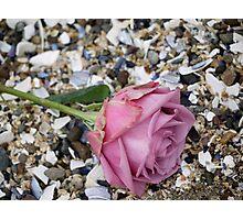 Seashell Rose Photographic Print