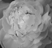 Pivoine en noir et blanc by LynnEngland