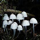 Funky Fungi Umbrellas by Joel Gogoll