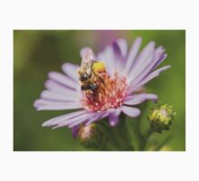 Cute bee on an Aster Baby Tee