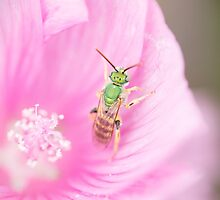 Green Metallic Bee by Annora Ayer