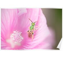 Green Metallic Bee Poster