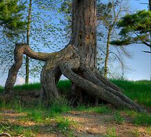 Resilience: The Pine Tree by Joe Jennelle