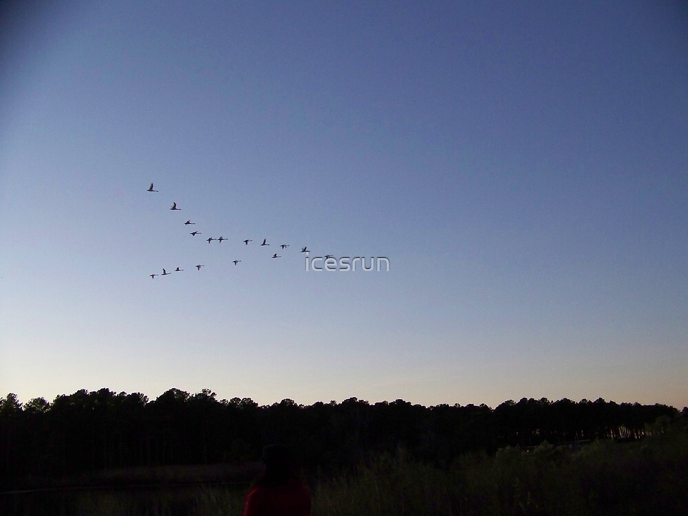 Flying V formation by icesrun