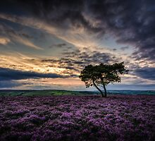 Goathland Lonely Tree  by Neil Cameron