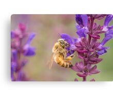 Honeybee on Salvia Canvas Print