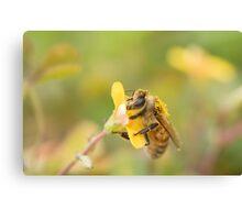 Honeybee on Wood Sorrell Canvas Print