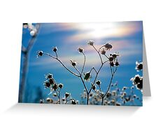 What Alberta Thistles Do in Winter Greeting Card