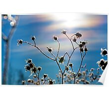What Alberta Thistles Do in Winter Poster