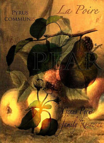 La Poire #1 by Sarah Vernon