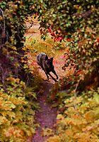 Exploring the Wilderness by Rebecca Eldridge