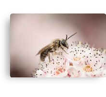 Bee on Cherry Blossoms Canvas Print