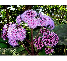 Flower mystery Photographic Print