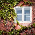 Window by Sergey Martyushev