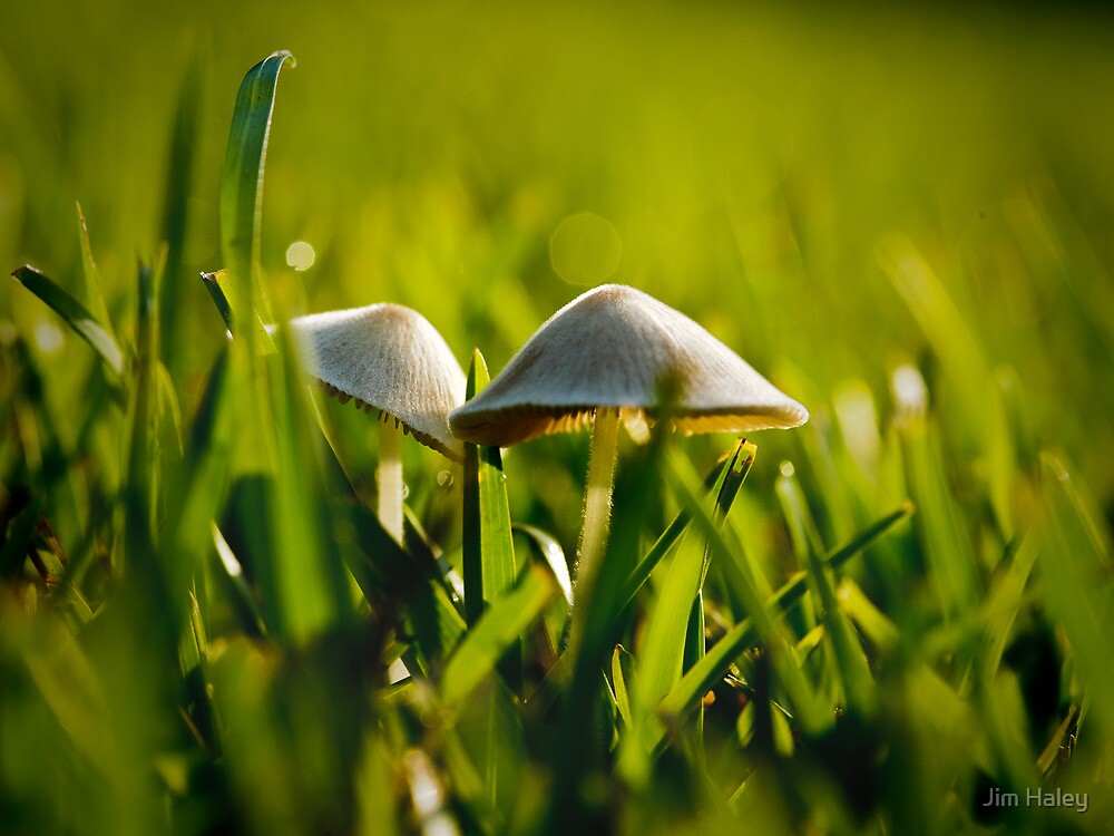 Two Toadstools  by Jim Haley
