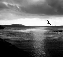 Morning flight by Agnes McGuinness