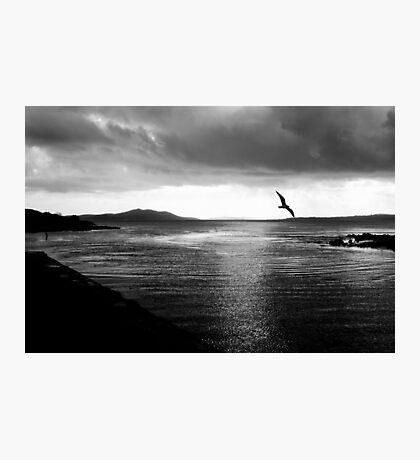 Morning flight Photographic Print