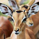 Impala by Sassie Otto