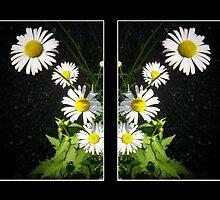 Daisy by katpix