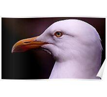Herring Gull Poster