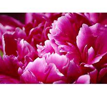 Peony - Beauty II Photographic Print