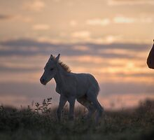 Sunset Rising  by Henri Ton