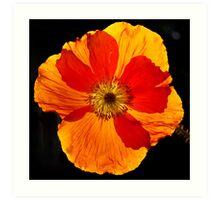 Poppy Sunburst Art Print