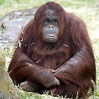 Orangutan  by Kerrie Ellison