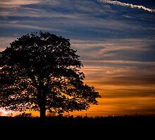 Erm.....tree. by Rob Cheeseman