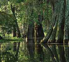 Louisiana Bayou by Linda Trine