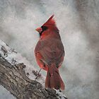 Cardinal in Snowstorm by Linda Trine