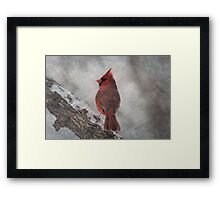 Cardinal in Snowstorm Framed Print