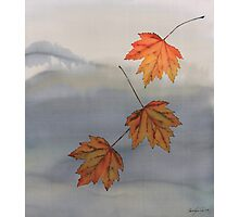 Falling Maples Photographic Print