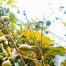 Mango season! by islefox