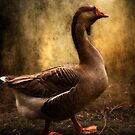 Goose by ajgosling