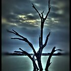 Dead Poet Tree by Scott Lebredo