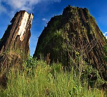 Pwisehn Malek (Chickensh*t Mountain) - Pohnpei, Micronesia by Alex Zuccarelli