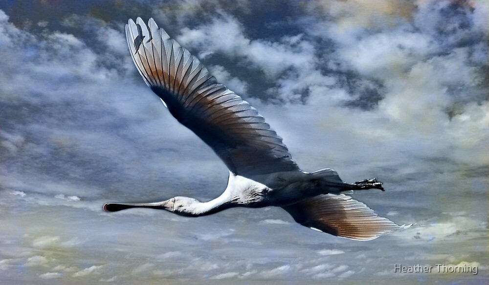 """""""Mystery Flight"""" by Heather Thorning"""