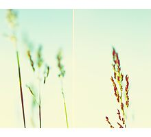 The tallest blade of grass is the first to be cut Photographic Print