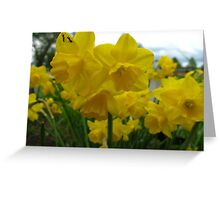 Vacationing on a daffodil Greeting Card