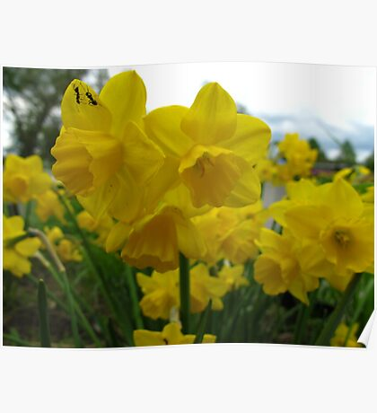 Vacationing on a daffodil Poster