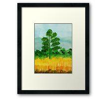 Big Pine alone in field, watercolor Framed Print